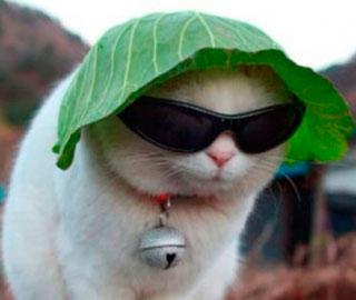 22 Славные Фотографии Кошек, Котят и Котов