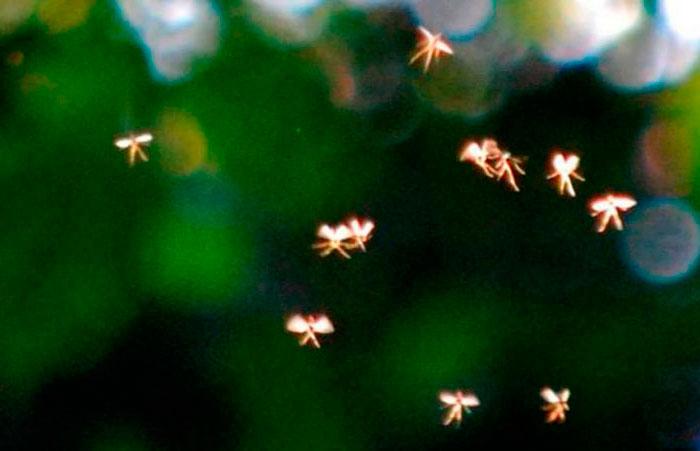 Преподаватель Вуза Утверждает, что Сфотографировал Крошечных Летающих Фей