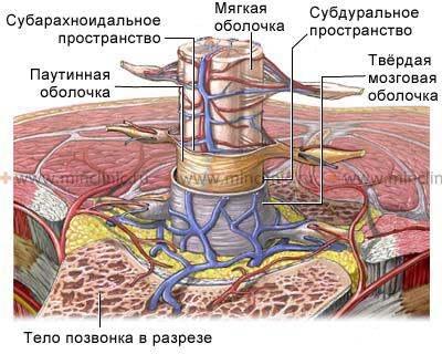 Неврологические Синдромы
