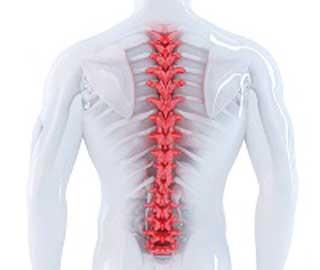 Серотонин вызывает спазмы при травме спинного мозга
