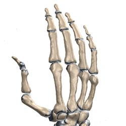 Диагностика и Лечение Деформаций Пальцев Типа «Шея Лебедя»
