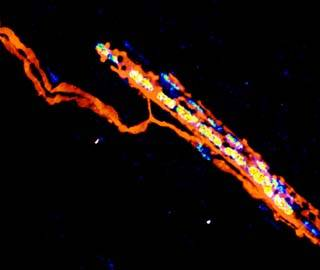 Выявлены пусковые механизмы восстановления после травмы спинного мозга