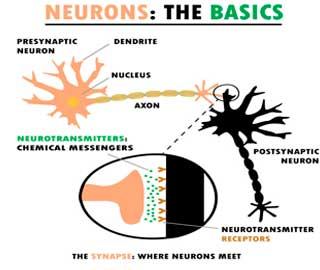 Ремонт и Регенерации Нейронов