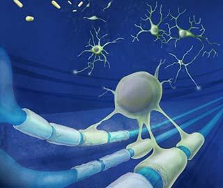 Инновационное исследование показывает, что спинной мозг обучается самостоятельно