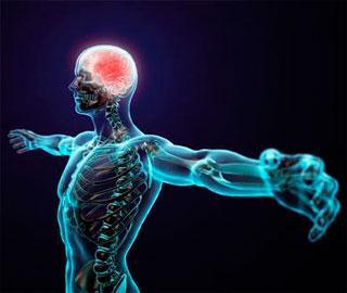 Получен Новый Способ Усиления Роста Нервов После Травм