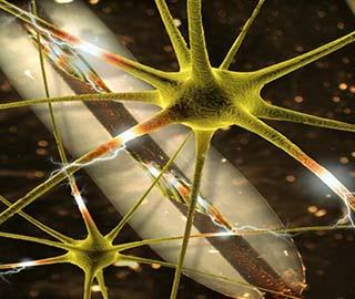 Восстановление нервной ткани при повреждении спинного мозга