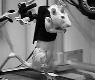 Обучение на Беговой Дорожке - Способствует Развитию Двигательных Функций, После Неполной Травмы Спинного Мозга