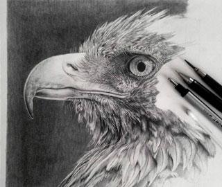 Ультра - реалистичные графитовые рисунки Моника Лее