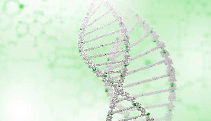 Потребительская генетика и ребенок от трех родителей