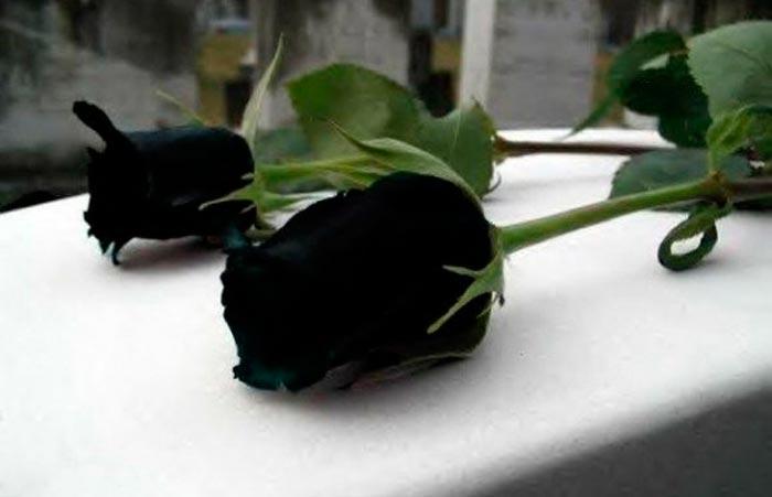 Страшно Красивые Черные Розы