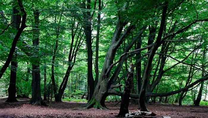 Hylophobia - страх деревьев