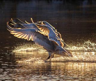 Лебединое Озеро Которое не Замерзает в Разгар Сибирской Зимы