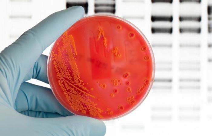 Микробиомная терапия человека