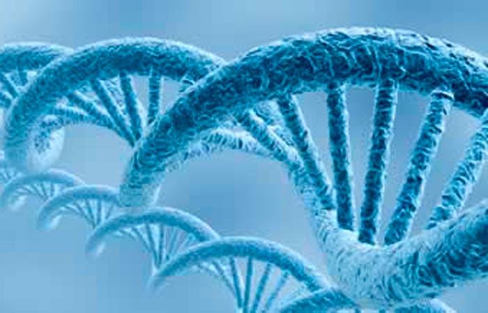 РНК как основа терапии