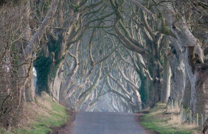 Темные Изгороди – Сказочная Алея в Ирландии, Великобритания