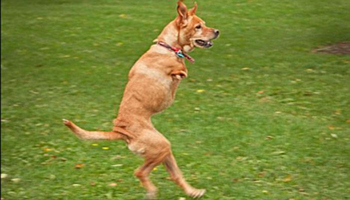 Вера (Faith) – Двуногая Собака, Несущая Надежду и Вдохновение