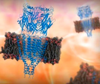 Раскрыта 3-D Структура Нервно-рецепторного Аппарата