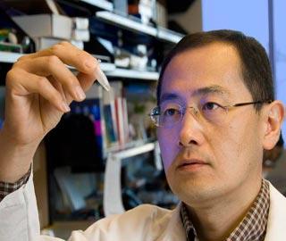 Японские Ученые Открыли Новый Способ Получения Стволовых Клеток