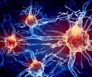 Нейроны спинного мозга, которые контролируют боль и зуд