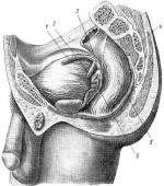Нарушение Функции Тазовых Органов при Травме Спинного Мозга