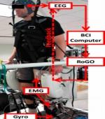 Биоробот Управляемые с Помощью Мозга