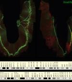 Ученые Определи два Основных Гена для Дыхания