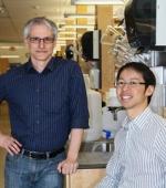 Крепкая Хватка в Руках: Исследователи Обнаружить Схемы Спинного Мозга, Которые Управляют Нашей Способностью к Хватке Рук