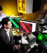 Исследование Проливает Свет на Регенерацию Нерва После Повреждения Спинного Мозга