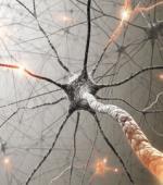 Нервная Система: Факты, Функции, Болезни