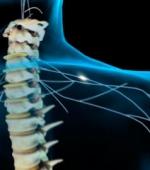 Пути к Лечению Повреждений Спинного Мозга