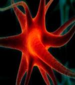 Ещё Один Шаг Вперед в Регенерации и Ремонте Поврежденных Нервных Клеток